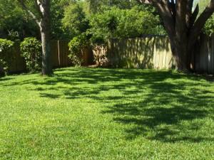 my backyard may 2012